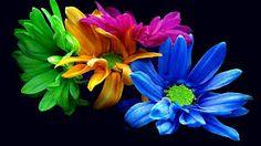 imagenes de flores en hd - Buscar con Google