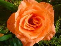 Mowa Kwiatów - wróżba andrzejkowa