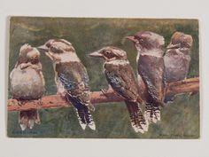 "A postcard featuring five kookaburras on a branch. ""Kerry Photo, Sydney."""
