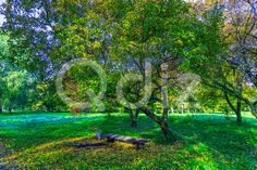 Qdiz Stock Images Landscape of Park With Bench under Trees,  #autumn #background #bench #branchy #City #day #fall #fallen #foliage #grass #green #landscape #leaf #leaves #morning #nature #nobody #park #scenery #season #seat #sunny #tree #view