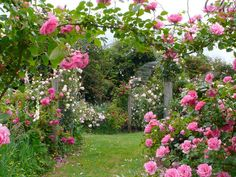 Rose Garden Wallpapers For Android