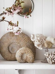 Perfectly arranged vignette displaying treasures from the sea.