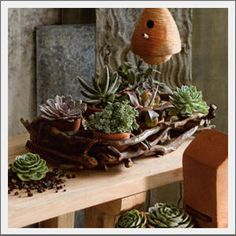 Driftwood Wall or Tabletop Planter. Make your own tabletop or wall garden by planting in these small terracotta pots, nestled in an artfully assembled natural driftwood planter. The wall planter (shown sitting) holds 6 pots and features rope handles. Use on a tabletop (as shown) or hang from the handles for a wall garden.