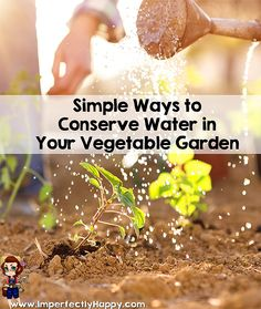 How to conserve water in your garden and still have an amazing harvest! |ImperfectlyHappy.com