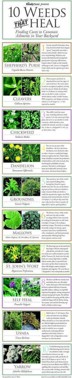 Infographics on weeds!  Stop spraying Roundup and let these natural herbs grow :-)  #witt #weeds #heal
