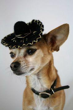 Dog Sombrero  Black Mariachi by ToScarboroughFair on Etsy, $42.00