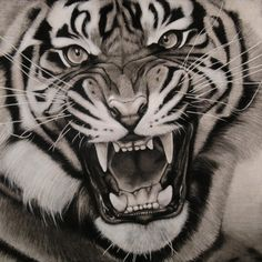 asunder by burnt-sticks Tiger drawing #AnimalArt #Tiger #Art