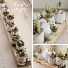 Do you bring home flower bulbs? See here 10 sweet flower bulbs decoration idea Deco Floral, Arte Floral, Wedding Table Centres, Deco Champetre, Easter Flowers, Diy Ostern, Table Centers, Bulb Flowers, Easter Crafts