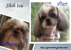 "... off all the visits? click here! - Dog grooming salon ""Groom with love"