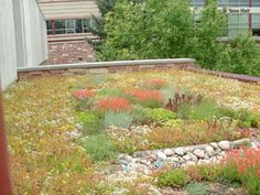 Green roof on the west side of the Microbiology Building on Colorado campus