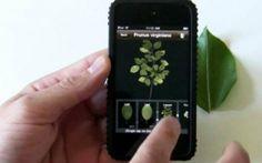Ecco le app per coltivare orto e giardino