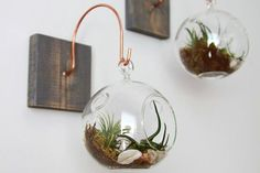 Wood and Copper Mount with Terrarium // Unique Wall Decor // Handmade Home Decor. - Wood and Copper Mount with Terrarium // Unique Wall Decor // Handmade Home Decor, tillandsia, aeriu - Retro Home Decor, Easy Home Decor, Handmade Home Decor, Cheap Home Decor, Vintage Decor, Rustic Decor, 1950s Decor, Rustic Room, Prim Decor