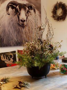 Cow, Christmas Decorations, Horses, Decorating, Pictures, Animals, Decor, Photos, Decoration