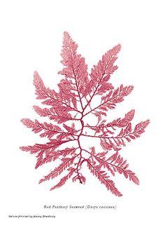 seaweed as fine art - Bing Images