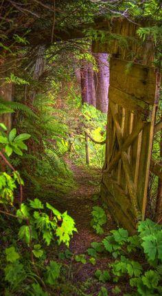 Through the secret door...I'd go through this door in a heartbeat.