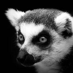 Portraits of Animals – Magnifiques photos de Lukas Holas