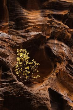 """Existence"" - The Narrows, Zion National Park, Utah by Justin Reznick"