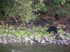 Just another bear spotting! Bear, Explore, Bears, Exploring
