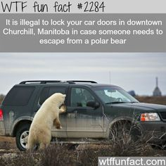 WTF Fun Facts is updated daily with interesting & funny random facts. We post about health, celebs/people, places, animals, history information and much more. New facts all day - every day! Wtf Fun Facts, True Facts, Funny Facts, Random Facts, Crazy Facts, Strange Facts, Wierd Facts, Odd Facts, Bizarre Facts