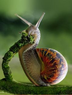 The Sound of a Wild Snail Eating by Elisabeth Tova Bailey — Reviews, Discussion, Bookclubs, Lists