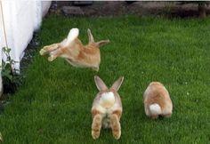 Bunnies doing binkies