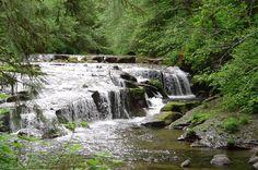 Siuslaw Forest Oregon