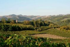 View from Villa I due Padroni in the vineyards of Lombardy in the North of Italy.