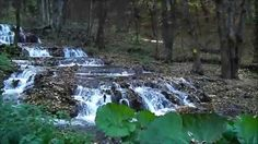 Szilvásvárad - Szalajka völgy Hungary, Aquarium, Goldfish Bowl, Aquarium Fish Tank, Aquarius, Fish Tank