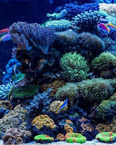 Summary: Good aquarium guides for Salt Water Aquarium are not easy to find but I can offer you good ebook to this topic . Saltwater Aquarium Setup, Coral Reef Aquarium, Saltwater Tank, Marine Aquarium, Coral Reefs, Aquarium Fish, Reef Tanks, Ocean Scenes, Aquascaping