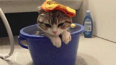 Current mood: wet cat in a bucket.