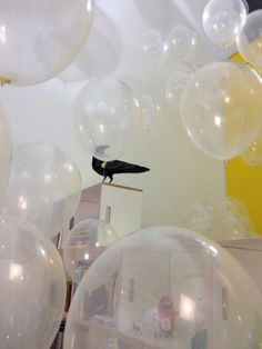 Gustav flying trough balloon clouds at our studio opening.