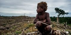Thousands of West Papuans have literally risked their lives to sign this petition. Stand with them to end genocide and torture! (24381 signatures on petition)