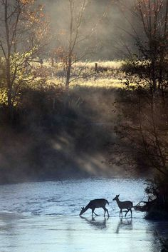 Deer crossing Hersey River near Reed City, MI