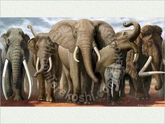 Extinct Elephant Species Related Keywords & Suggestions - Extinct ...