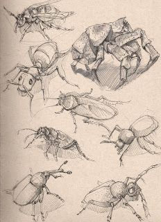 am currently talking Dynamic Sketching with Peter Han at the Concept Design Academy in Pasadena. I've learned quite a bit from the class a. Pencil Drawings Of Animals, Animal Sketches, Life Drawing, Drawing Sketches, Drawing Ideas, Sketching, Insect Art, Anatomy Drawing, Sketch Inspiration