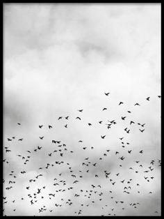 Bird sky, plakat i gruppen Plakater og posters / Størrelser / 50x70cm hos Desenio AB (8257)