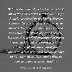 Did You Know that there's a Common Myth About Raw Food being Bad for your Dog? A study conducted in Stockholm, Sweden compared a processed versus raw diet in animals. The young animals fed a cooked, processed diet initially appeared healthy, but once they reached maturity, they began to age quickly and develop degenerative disease symptoms. The control group raised on a raw, uncooked diet did not age as fast, showed no degenerative disease symptoms and remained healthy.