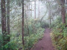 Trail at Twanoh State Park.