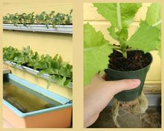 How To Set Up An Aquaponic Gutter Garden... - http://www.ecosnippets.com/gardening/aquaponic-gutter-garden/