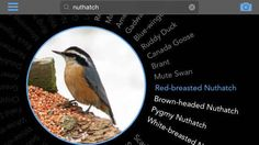 Birdsnap  -- An app developed by scientists at Columbia University and the University of Maryland and uses computer vision and machine learning to identify bird species. Just snap the picture on your phone and upload it to the app