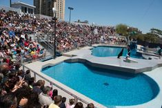 Coney Island Aquarium New York City - ny aquarium coney island Carroll Gardens, New York Daily News, Military Discounts, Coney Island, New York Travel, Homeland, New York City, Aquarium, Places To Visit