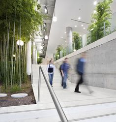 Atrium garden on the groundfloor of The Donelly Centre for Cellular and Biomolecular Research, Toronto, ON, Canada