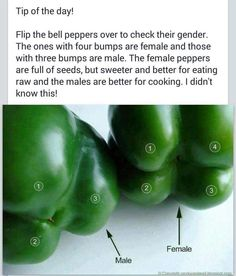 I did not know this...very interesting...