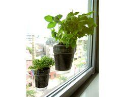 Urban window planters.
