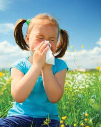 Nutritional strategies recommended for decreasing risk in high risk Allergic Rhinitis in infants