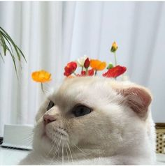 I want this cat🤩🤩❤️ Animals And Pets, Baby Animals, Funny Animals, Cute Animals, Cute Creatures, Beautiful Creatures, I Love Cats, Cool Cats, Diy Cat Tent