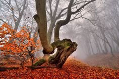 Photo AUTUMN IN THE FOREST by TOMÁŠ MORKES on 500px