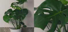 Image result for krukväxter