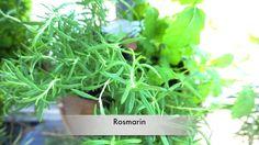 West Balkon meine Topfpflanzen, Blumen, Bäumchen, Sträucher und Kräuter Herbs, Plants, Ivy, Potted Plants, Tree Structure, Decorating Ideas, Herb, Plant, Planets