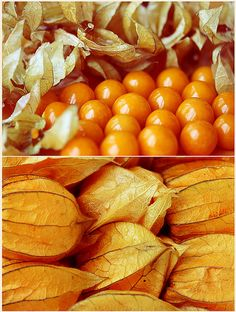 "My favorite fruit! Physalis peruviana, you can find it at farmers markets across South America. It goes by a different name in each country – ""aguaymanto"" in Peru, ""physalis"" in Chile, ""uvilla"" in Ecuador, and ""uchuva"" in Colombia."